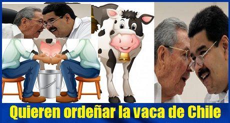 Cuba Y Venezuela Quieren Ordenar La Vaca De Chile
